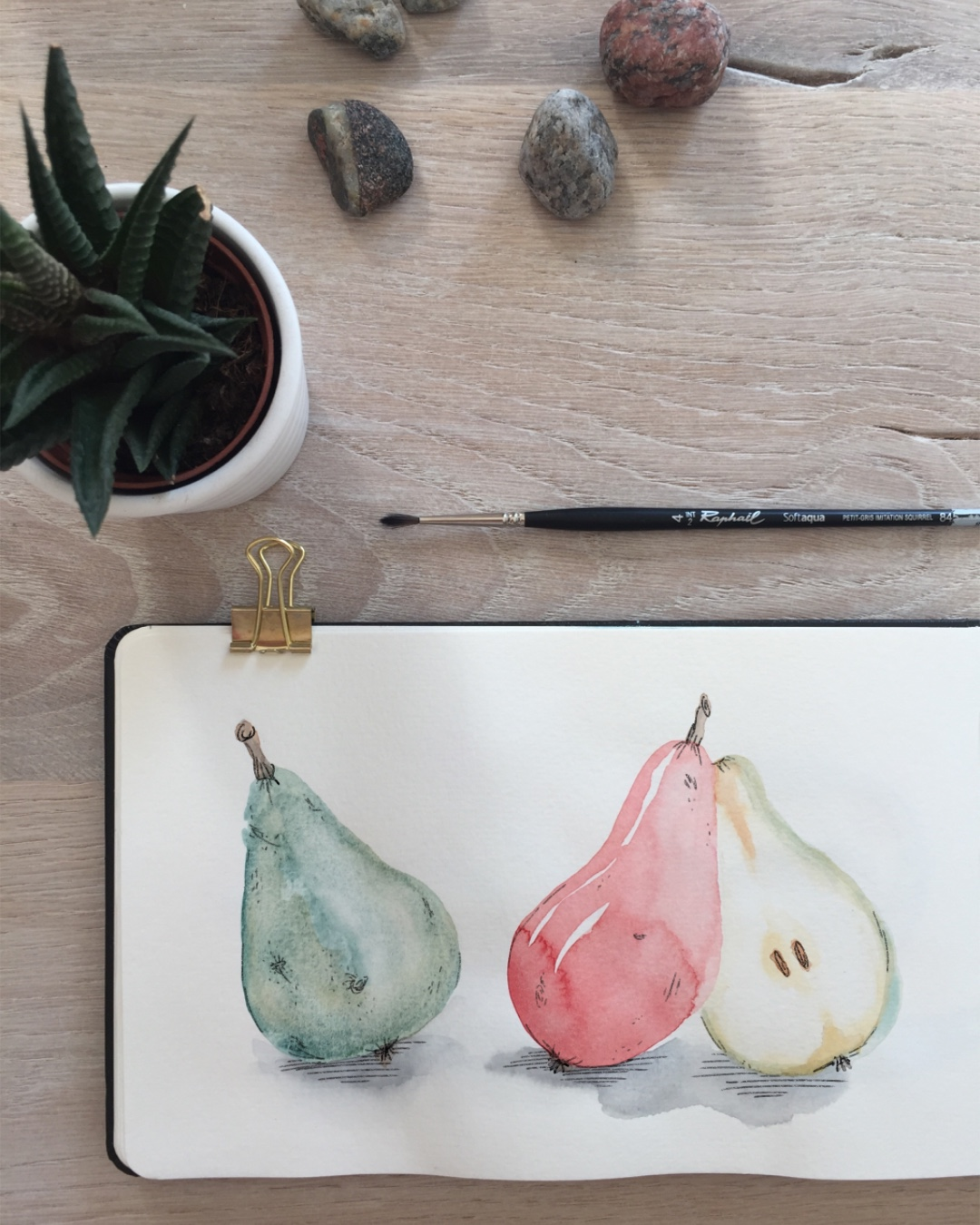Watercolour pears in a sketchbook.