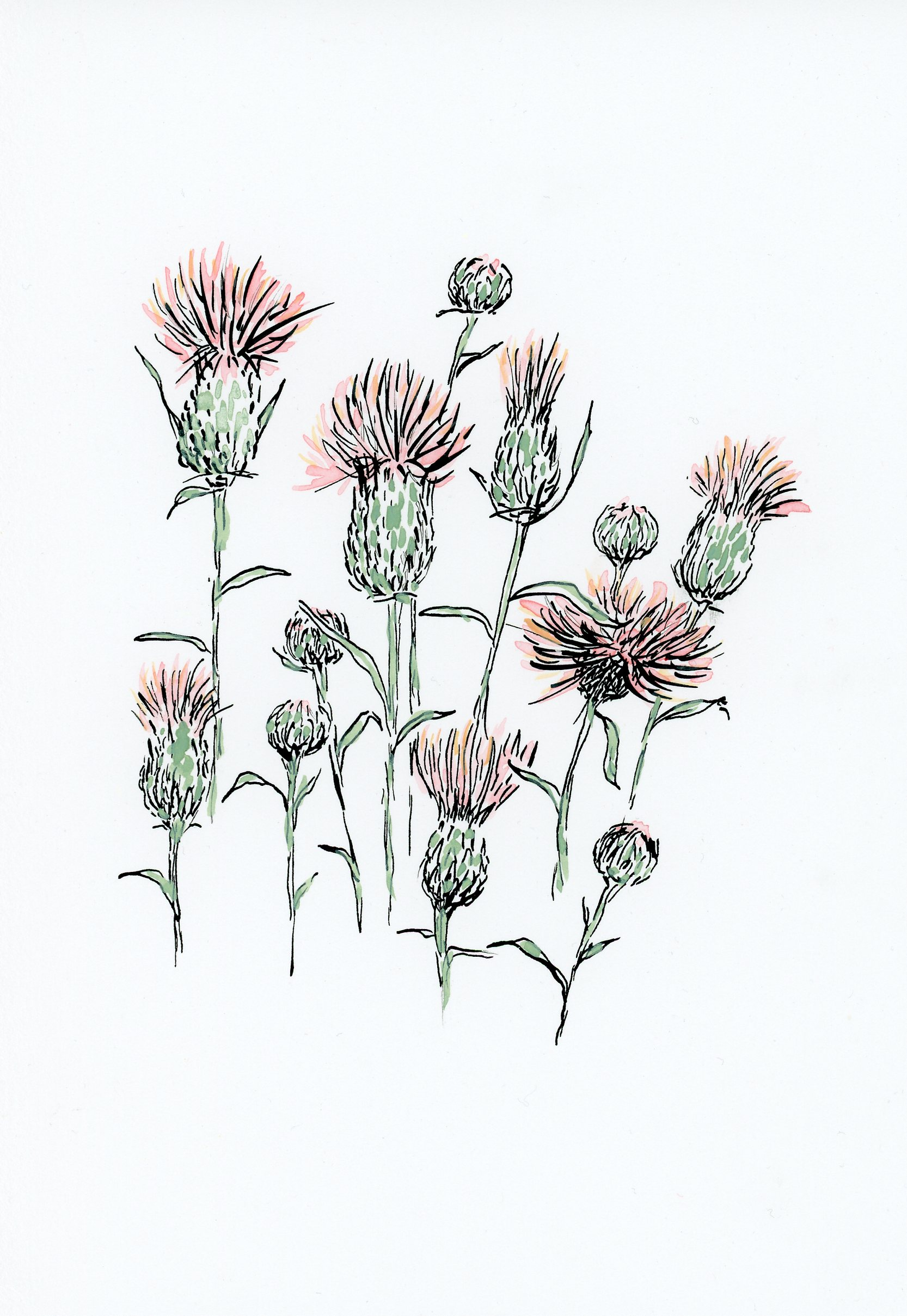 Painted thistles