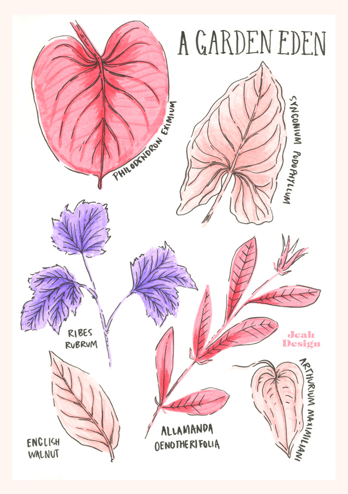 Brush pen illustration of different kinds of leaves drawn with pink and lilac colours.